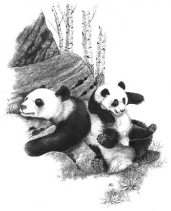 Panda cub at play, book illustration