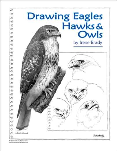 Drawing Eagles, Hawks & Owls...