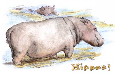 Hippos in the river...