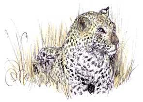 Leopard at dusk...